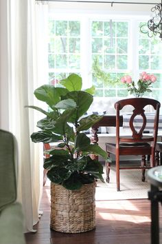 How to Incorporate Decor Trends Into Your Home Now {Part One} | fiddle leaf fig