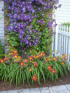 Clematis and daylilies . Clematis and daylilies Daylily Garden, Cottage Garden Design, Front Yard Landscaping, Landscaping Ideas, Outdoor Landscaping, Backyard Patio, Day Lilies, Garden Styles, Dream Garden