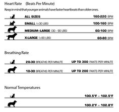 Dog Heart Rates and Pulses Infographic