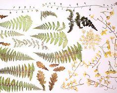 Hojas de hierbas secas fuentes florales pétalos diy proyectos presiona hojas de roble de helecho verde arte púrpura petunia pétalos Chêne de fougère э1