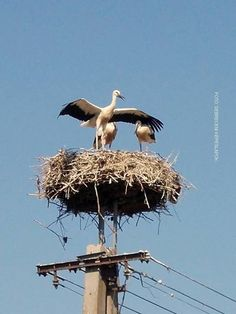 White storks nesting in Debrecen, Hungary . Book & Visit HUNGARY now via… Wonderful Places, Beautiful Places, Heart Of Europe, Budapest Hungary, Flora, Travelogue, Cool Places To Visit, Pet Birds, Countryside