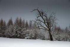 winter by  Irca Caplikas on 500px
