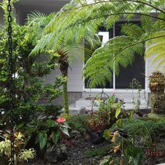 Housesitting assignment in Hilo, HI, USA