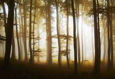 Photo Forest Mist by Bernadett Pusztai on 500px