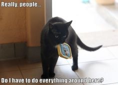 Cats Have To Do Everything