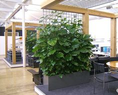 office planter boxes. private meeting rooms in an open plan office area the lungs of this creative workspace using indoor plant climbers troughs planter boxes