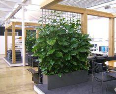 Imagen de http://4.bp.blogspot.com/-03GGOub6uuk/VFVTdcXlBpI/AAAAAAAAAjM/wzauAeaqN0s/s1600/1fito1.jpg.