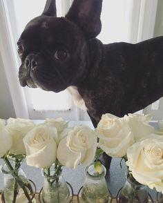 Puppy Rossie