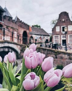 Uploaded by Kristina Romanova. Find images and videos about photography, flowers and tulips on We Heart It - the app to get lost in what you love. Travel Wall, Pink Flowers, Ranunculus Flowers, Exotic Flowers, Yellow Roses, Daffodils, Pansies, Pink Roses, Flower Backgrounds