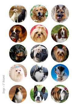 Dogs Bottle Cap Images - 4 x 6 Digital Collage Sheet - 1 inch Round Circles - INSTANT DOWNLOAD