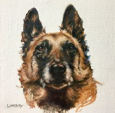 Belgian Shepherd Pet Portrait, oil painting & custom Dog Art by Heather Lenefsky, Cat Shaming, Belgian Shepherd, Horse Care, Exotic Pets, Animal Paintings, Dog Art, Pet Portraits, Art Inspo, Art Commissions