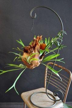 「ドラセナコンシンネ 葉物 上級者  グリーンアレンジ 」の画像検索結果