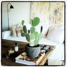 Perfect cactus + rustic table + cool art
