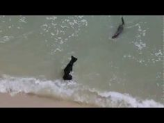 Dog plays with sea otters in Penang Beach - YouTube