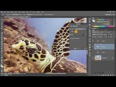 Adobe Photoshop CC 2015 Tutorial | 080 Tipping a color cast with Photo F...