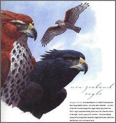 Document with a banner and navigation bars. Extinct Birds, Extinct Animals, Prehistoric Wildlife, Prehistoric Creatures, Reptiles And Amphibians, Mammals, Drawing Artist, Big Bird, Sea Birds