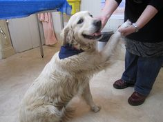 Fostering a special needs dog- you'll want tissues handy!