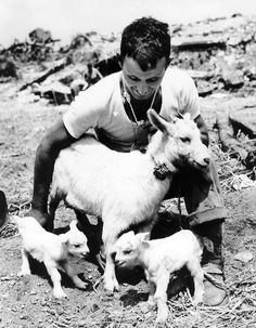 When the Marines landed on Okinawa, they arrived just in time to see this goat become a mother of two. So in right fashion, Marine PFC Donald Chatterton (of Minnesota) appointed himself as guardian of the family.