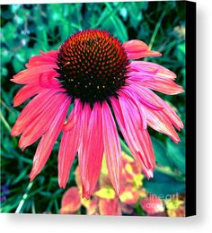 Brilliant Coneflower Canvas Print by Onedayoneimage Photography.  All canvas prints are professionally printed, assembled, and shipped within 3 - 4 business days and delivered ready-to-hang on your wall. Choose from multiple print sizes, border colors, and canvas materials.
