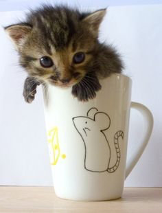 Kitten in a mouse mug. The cutest.