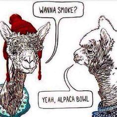 Yeah, alpaca bowl.