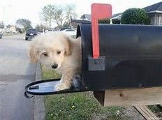 Image result for Pet Mail