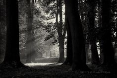 Rays Photography | Flickr - Photo Sharing!