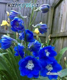 Good Morning Friday, Happy Friday, Good Day, Good Night, Hanukkah, Plants, Greek, Top, Buen Dia