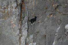 13 fotografías de cabras montesas al filo del acantilado