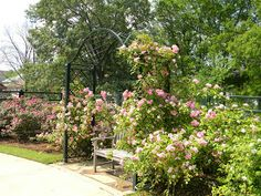 tyler texas rose garden | Posted by Ed & Mikki at 12:47 PM