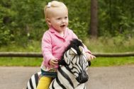 Animal-Riding animals are healthy mobility devices that offer fun and enjoyment for children. They are equipped with a soft plush body and an innovative driving system with steerage, handles, footrests and plastic wheels.The animals are available in 3 sizes (small, medium, large).