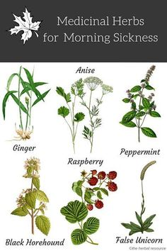 Outstanding Home Remedies info are offered on our website. Read more about natural home remedies. Healing Herbs, Medicinal Plants, Natural Healing, Natural Herbs, Natural Health Remedies, Herbal Remedies, Herbal Medicine, Natural Medicine, Calendula Tea