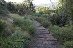 Steps chiseled from slabs of Lueders limestone traverse the hillside through plantings of drought-resistant grasses, perennials and shrubs./ A collaboration between a landscape designer Mick Kopetsky and a culinary-arts-trained homeowner n Northern California's Sonoma County  Credit to Jean Victor, photos by Barbara Ries