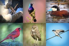 How to Hack Your Smartphone to Take Good Photographs of Birds | Audubon