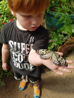 Homeschool open day at Butterfly world - Mamma & Bear Butterfly Park, Butterfly Life Cycle, Lizard Types, Butterflies Flying, Opening Day, Bird Species, Life Cycles, Cape Town, Small Groups
