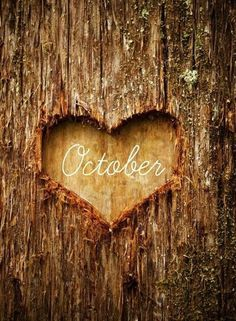 I love october ♡ autumn and my birthday month! Phone Wallpaper Images, Cool Wallpapers For Phones, Fall Wallpaper, January Wallpaper, Phone Wallpapers, Voici Venu Le Temps, Neuer Monat, October Quotes, Sunday Photos