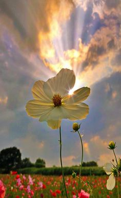 Flowers Nature, Wild Flowers, Beautiful Flowers, Nature Aesthetic, Flower Aesthetic, Beautiful Landscapes, Beautiful Images, Jolie Photo, Flower Backgrounds