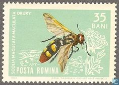 1964 Romania [ROU] - insects