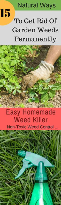 15 Easy and Natural Ways To Get Rid Of Garden Weeds Permanently. How to Kill Garden Weeds Organically. #gardening