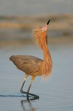 Strange bird.