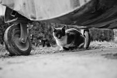 Cat Cat, Adorable Animals, Happily Ever After, Neko, Wordpress, Creatures, Kitty, Black And White, Guys