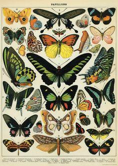 DIY Vintage Poster Frame, for my office botanical prints Vintage Butterfly, Butterfly Design, Butterfly Print, Butterfly Artwork, Butterfly Project, Butterfly Images, Butterfly Frame, Vintage Prints, Posters Vintage