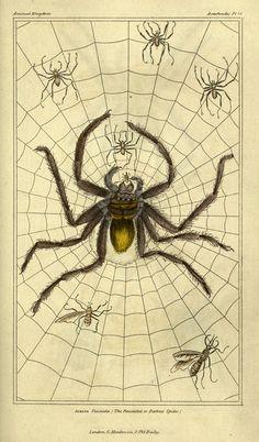 The animal kingdom, arranged according to its organizationLondon :G. Henderson,1834.