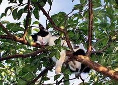 tree sleeping cat