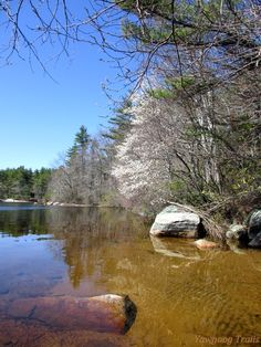 Spring view of the northern shore of #Yawgoog Pond from the former Paul Siple campsite.  Image by David R. Brierley.