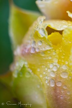 Colorful Dew Drops