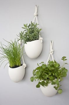 rope porcelain hanging planters is part of Wall mounted planters Add some vertical greenery to any wall in your home The hanging ceramic planter hangs from twisted cotton rope High fired porcelai - Indoor Plant Wall, Plant Wall Decor, Indoor Plants, Indoor Gardening, Wall Hanging Plants Indoor, Hang Plants From Ceiling, Indoor Herbs, Kitchen Gardening, Air Plants