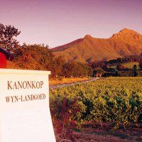 """In 1941 Pinotage vines were planted at the Kanonkop Estate, the wines of which have later risen to great fame and can mature up to 25 years, so that this estate has even been called """"a formidable leader of Cape's red wine pack. Premier Wine, Wineries, Grape Vines, Red Wine, South Africa, Cape, Country Roads, Canning, Gallery"""