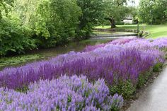 Encoping, in Sweden, known for its many beautiful parks  visited by Mr. Claus Dalby, Summer 2015
