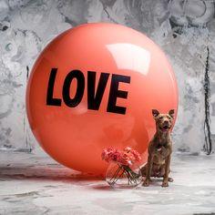 5 foot Big Love Ball with Duke | Color : Kōraru | Photo by Bob Garlick